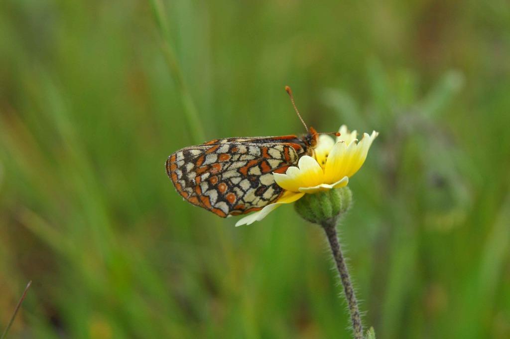 butterfly-569971_1920.jpg
