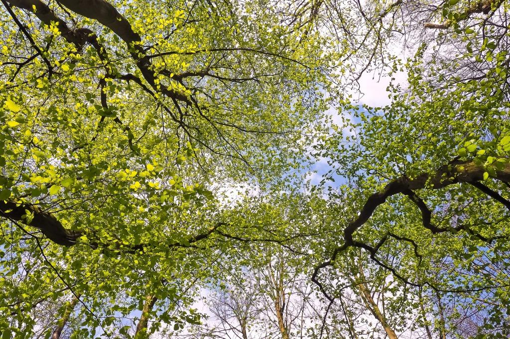 trees-2198178_1920